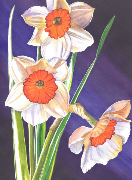 Painting - Three Jonquils by Catherine G McElroy