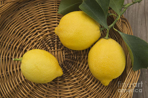 Photograph - Three Lemons by Inga Spence
