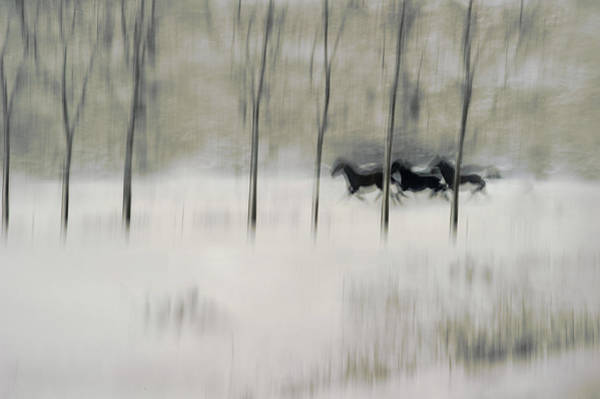Blur Wall Art - Photograph - Three by Milan Malovrh