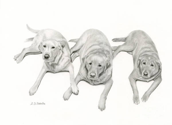 Pet Portrait Drawing - Three Of A Kind by Sarah Batalka