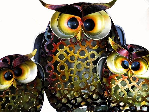 Photograph - Three Owls by David Rich