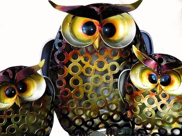 Photograph - Three Owls by David Rich