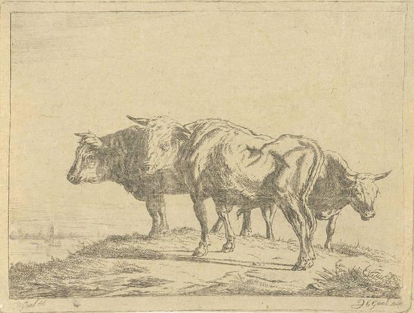 1854 Drawing - Three Oxen, Jacobus Cornelis Gaal by Artokoloro