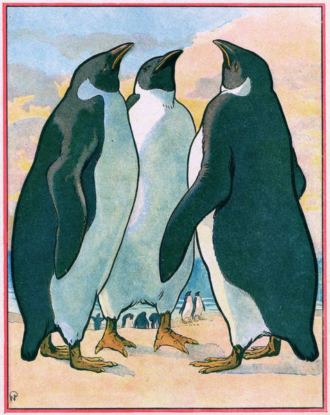 Early 20th Century Drawing - Three Penguins Look Skywards  While by Mary Evans Picture Library