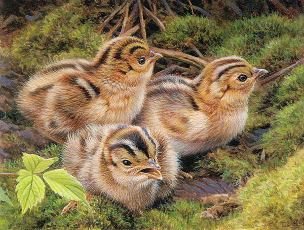 Pheasant Digital Art - Three Pheasant Chicks In Grass by Andrew Hutchinson