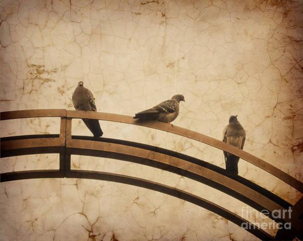 Pigeon Photograph - Three Pigeons Perched On A Metallic Arch. by Bernard Jaubert