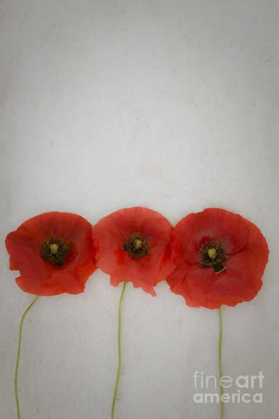 Photograph - Three Poppies by Maria Heyens