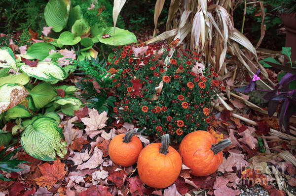 Photograph - Three Pumpkins by John Rizzuto
