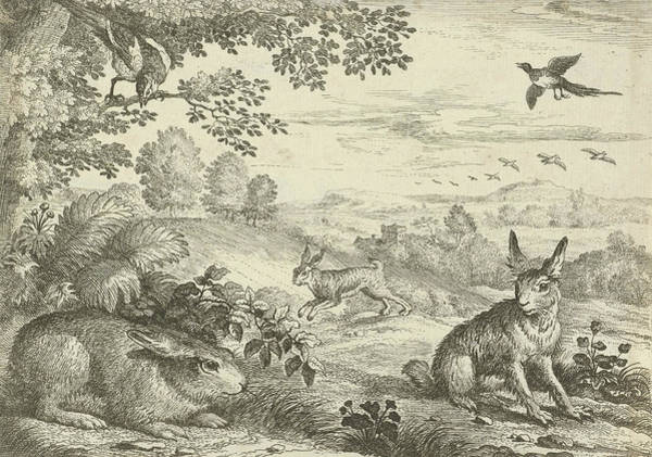 Magpies Drawing - Three Rabbits In A Landscape, Jan Griffier by Jan Griffier (i) And Pierce Tempest