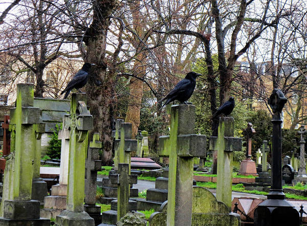 Photograph - Three Ravens by Gia Marie Houck