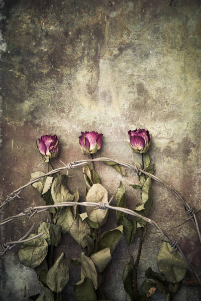 Three Roses And Barbed Wire Art Print