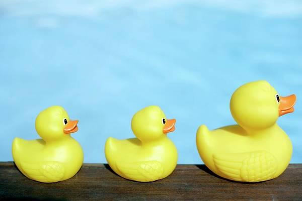 Rubber Duck Wall Art - Photograph - Three Rubber Ducks by Ian Hooton/science Photo Library