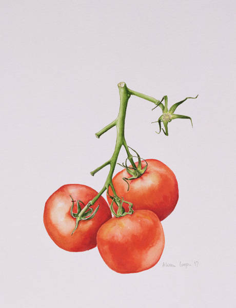 Food Still Life Painting - Three Tomatoes On The Vine by Alison Cooper