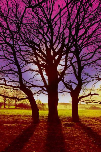 Digital Art - Three Trees by David Davies