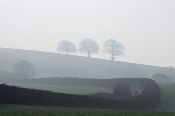 Photograph - Three Trees In The Mist by Pete Hemington