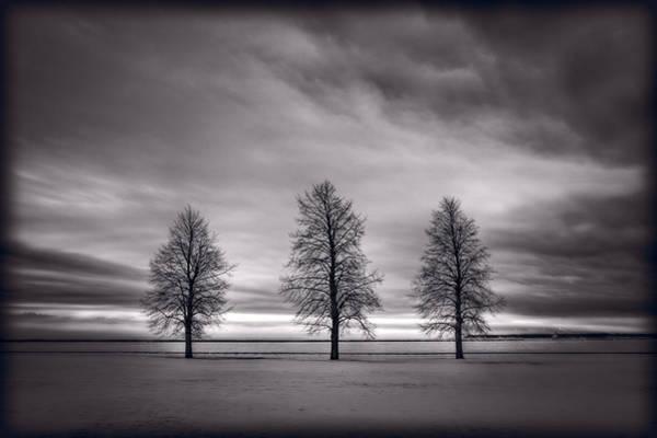 Black Ice Wall Art - Photograph - Three Trees by Steve Gadomski