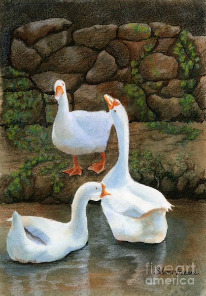 Bird Watercolor Mixed Media - Three White Ducks by Sharon Freeman