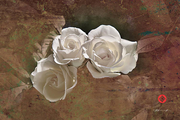 Photograph - Three White Roses by David Davies