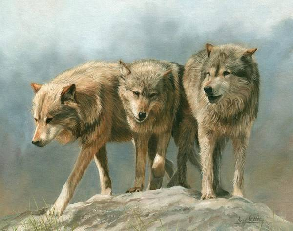 Three Wolves Art Print