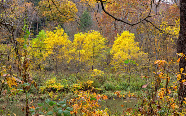 Photograph - Three Yellow Trees by John M Bailey