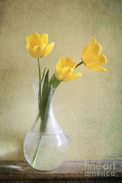 Wall Art - Photograph - Three Yellow Tulips by Diana Kraleva