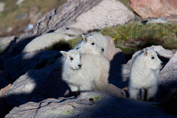 Photograph - Three Young Amigos by Jim Garrison