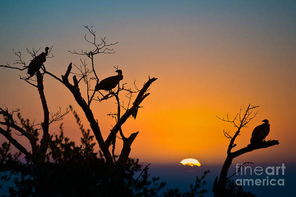 Wall Art - Photograph - Three Vultures Waiting by Delphimages Photo Creations