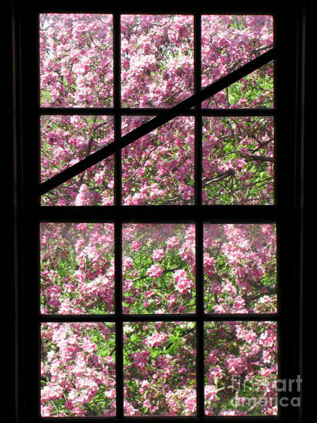 Window Photograph - Through An Old Window by Olivier Le Queinec