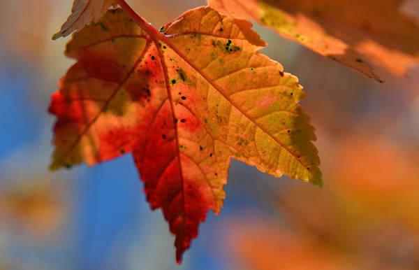 Photograph - ...through The Autumn Light by Melanie Moraga