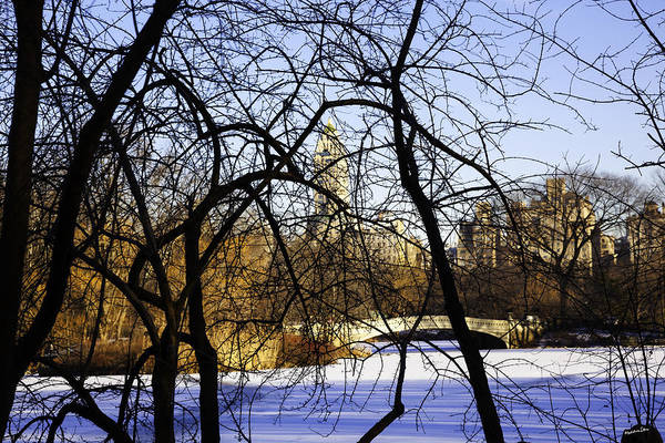 Wall Art - Photograph - Through The Branches 3 - Central Park - Nyc by Madeline Ellis