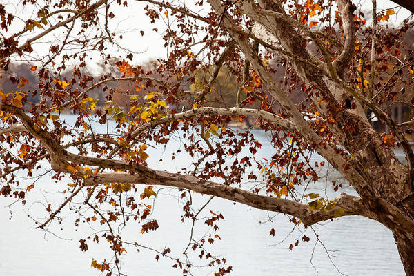 Photograph - Through The Branches by Melinda Ledsome