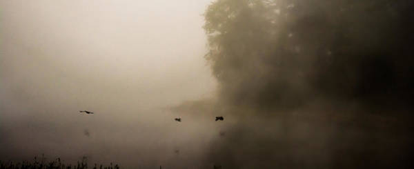 Photograph - Through The Fog by Parker Cunningham