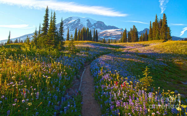 Mount Rainier Photograph - Through The Golden Meadows by Mike Reid