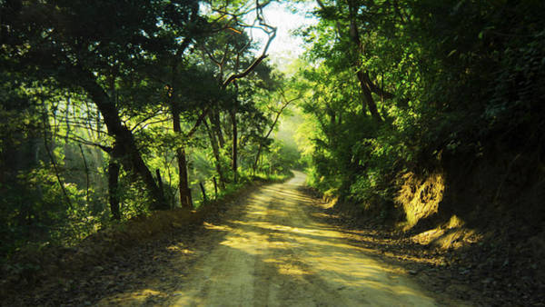 Dirt Roads Photograph - Through The Jungle by Aged Pixel