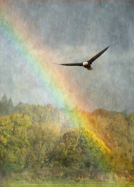 Eagle In Flight Photograph - Through The Rainbow by Angie Vogel