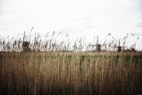 Photograph - Through The Reeds by Ryan Wyckoff