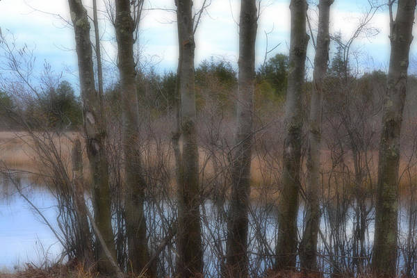 Photograph - Through The Trees by Beth Sawickie