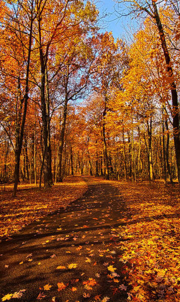 Back Road Photograph - Through The Woods We Go by Phil Koch