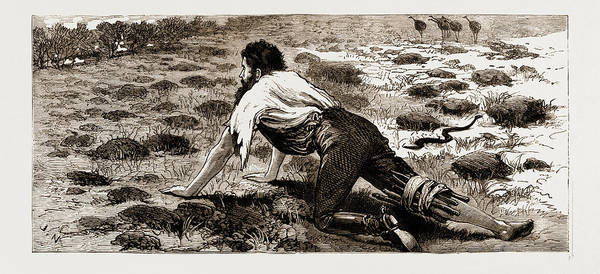 New South Wales Drawing - Thrown From His Horse, A Disabled Stockman In The Bush by Litz Collection