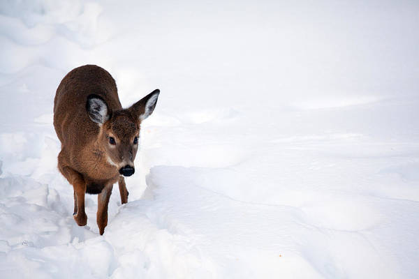 Thru Photograph - Thru The Snow by Karol Livote