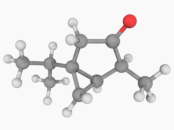 Compound Photograph - Thujone Molecule by Laguna Design/science Photo Library