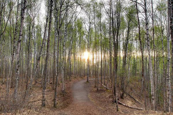 Photograph - Thunderbird Trail by Dawn J Benko