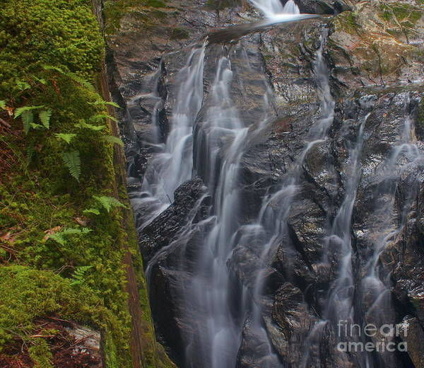 Photograph - Thundering Brook Falls With Ferns by Amazing Jules