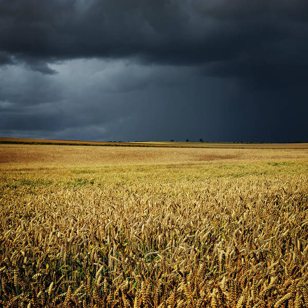 Urban Nature Photograph - Thunderstorm Clouds Over Wheat Field by Avtg