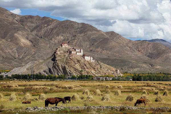 Domestic Cattle Photograph - Tibetan Castle And Fields by Wulingyun