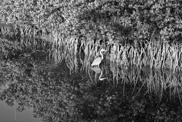 Photograph - Tidal Pool Reflection B W Wat 262 by G L Sarti