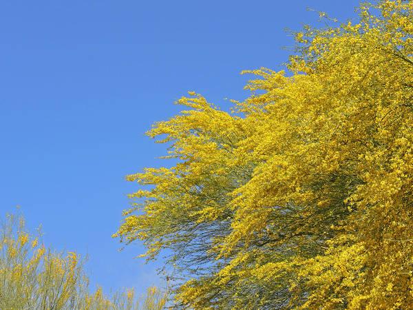 Photograph - Tidal Yellow by Lynda Lehmann