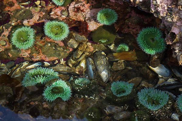 Wall Art - Photograph - Tide Pool, Salish Sea, Washington State by Ken Archer