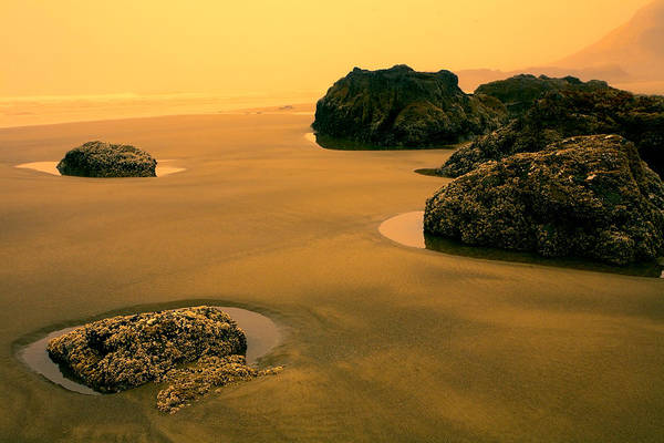 Strawberry Hills Wall Art - Photograph - Tidepools At Dusk by Bonnie Bruno