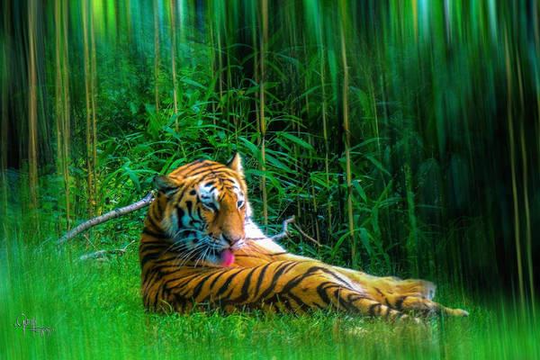 Photograph - Tidy Tiger Strips by Glenn Feron